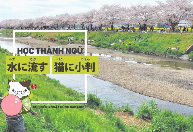 Làm quen với thành ngữ, bắt đầu từ 水に流す – 猫に小判